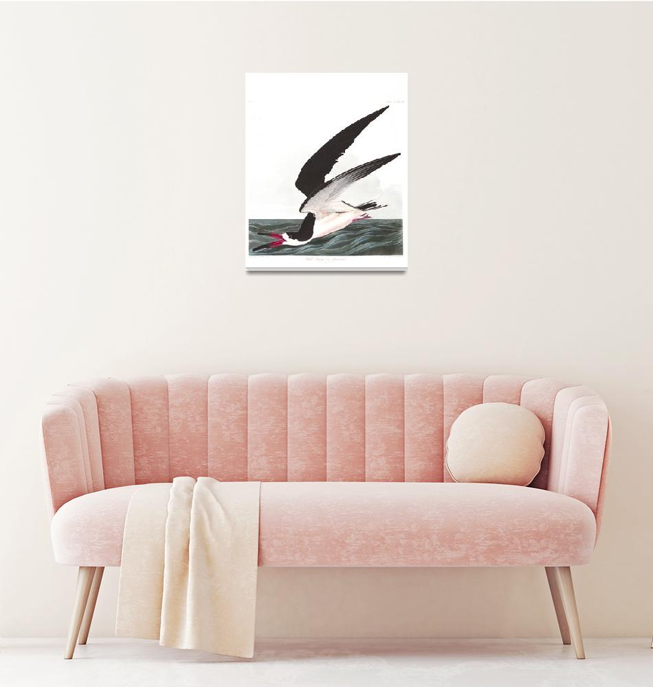 """Black Skimmer or Shearwater, Plate 323""  by FineArtClassics"