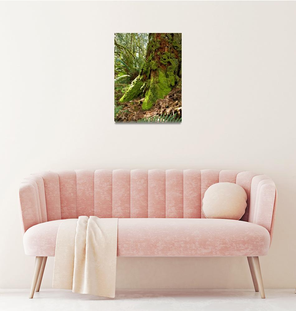 """Time Lost-Cedar stump-Oregon Woods""  (2008) by inkandbrushcreations"