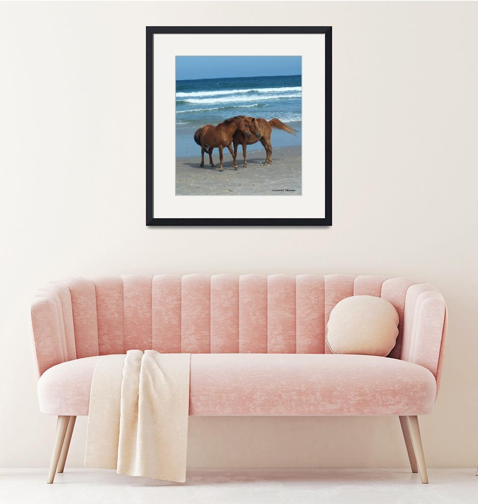 """""""Assateague Couple""""  (2015) by Kimmary"""