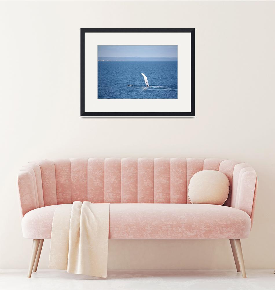 """""""NaP_ Whale Watching043""""  by nevilleprosser"""