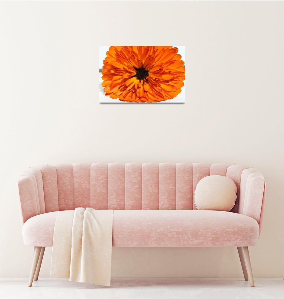 """""""Dahila - Flower""""  by tomgnt"""