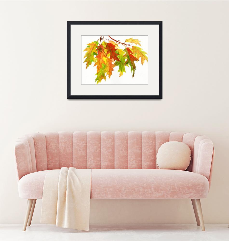 """""""Fall Oak Leaves (white background)""""  (2011) by Pacific-NW-Watercolors"""