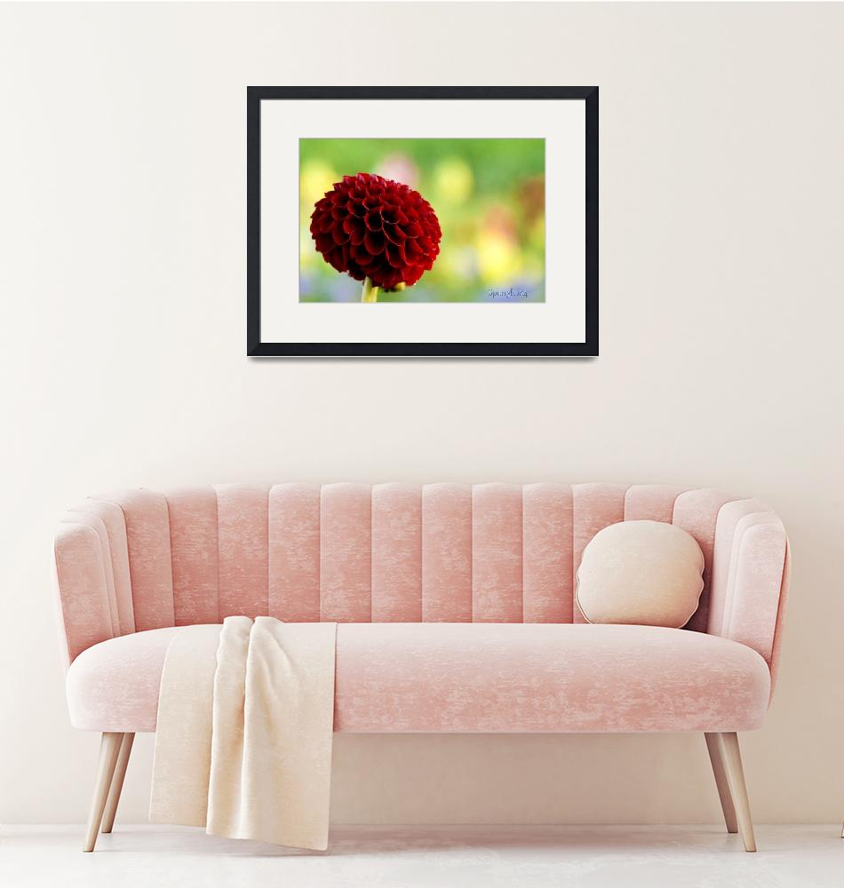 """""""A lovely ruby red flower""""  by Spangles44"""