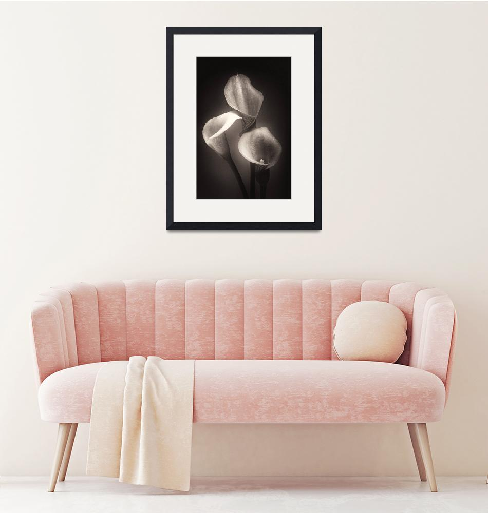 """""""Lilies in Subtle Light""""  (2011) by George_Oze"""