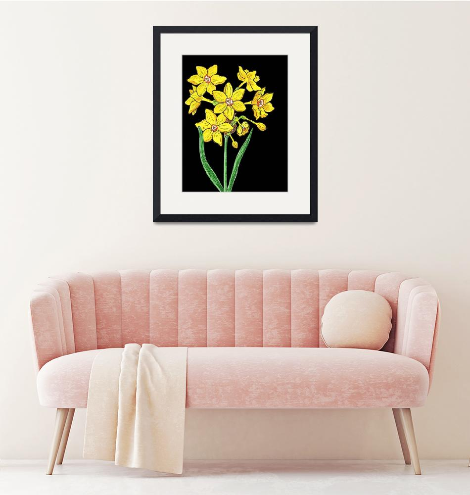 """Yellow Daffodil Watercolor with Black Background""  (2018) by IrinaSztukowski"
