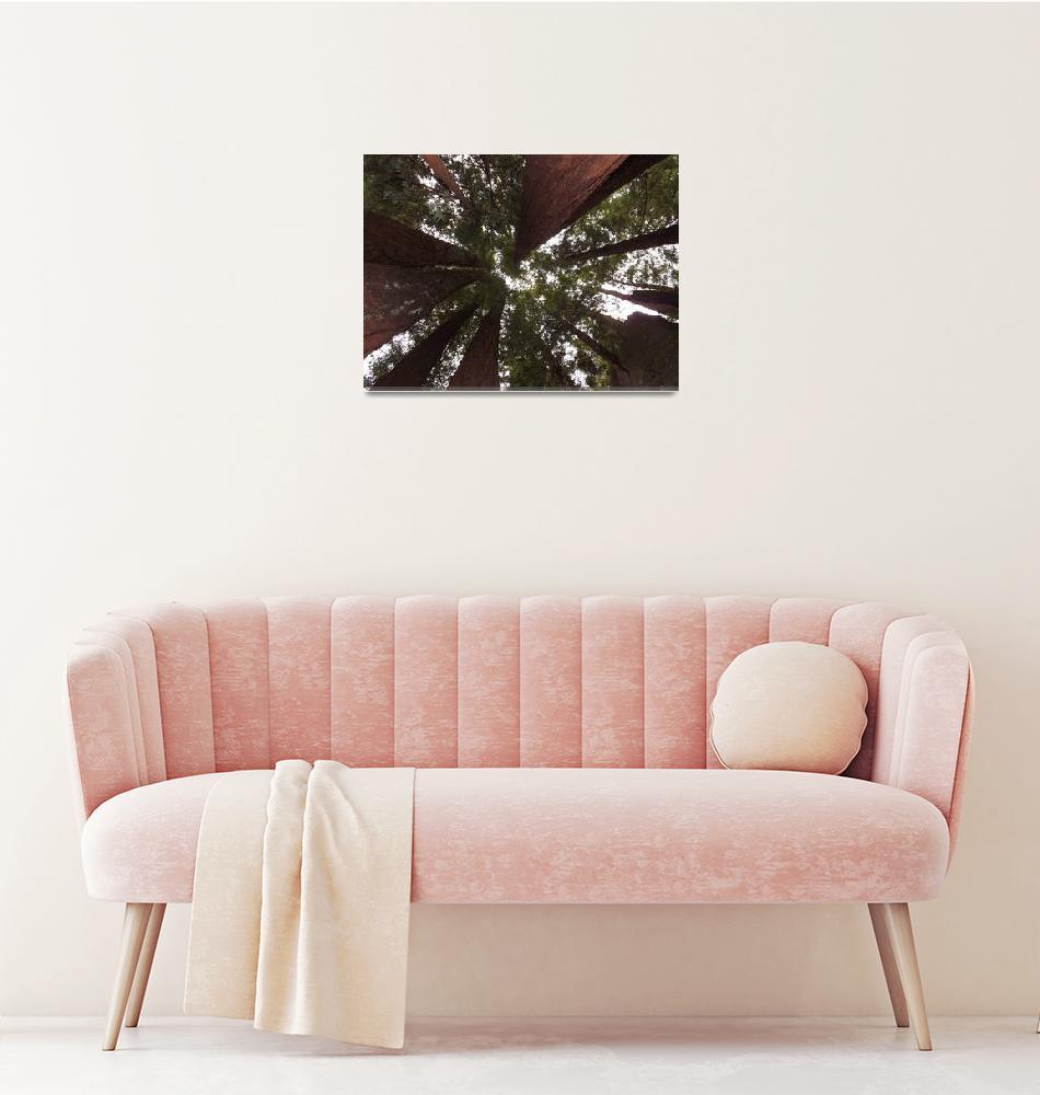 """""""DSCF0262 Redwood tree canopy"""" (2013) by OldRustBucket"""