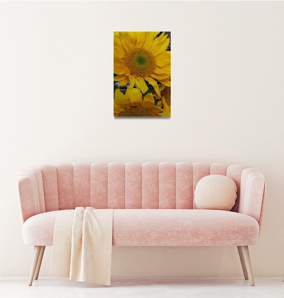 """Sunflower""  (2007) by athompson"