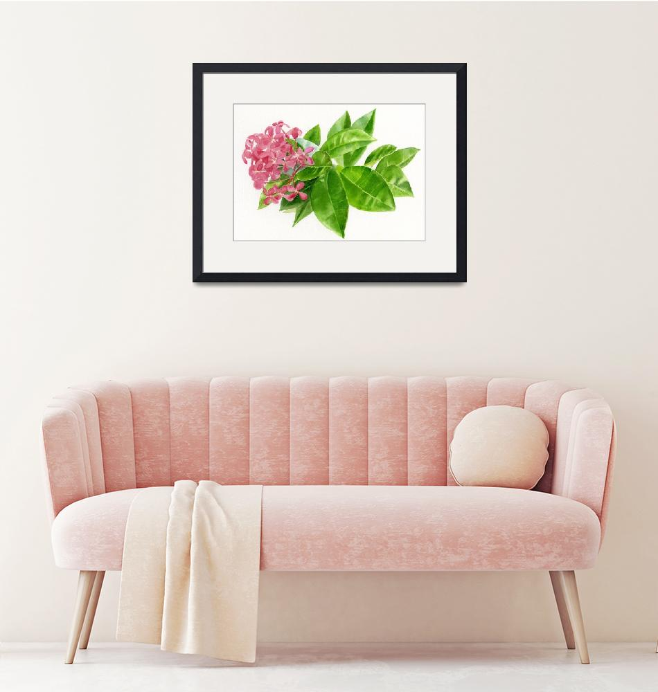 """""""Ixora, Pink Tropical Flower"""" (2012) by Pacific-NW-Watercolors"""