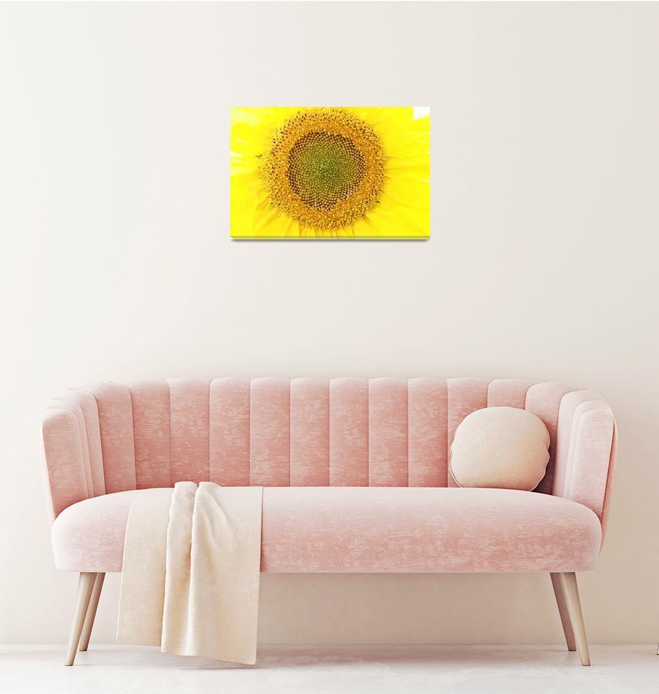 """""""Sunflower""""  (2013) by rhamm"""