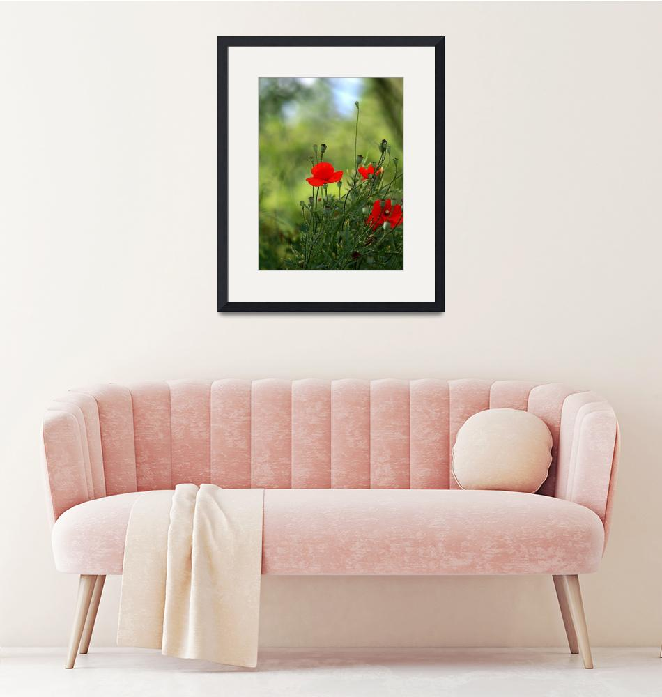 """""""Flower Red Poppies""""  (2013) by MilanMKM"""
