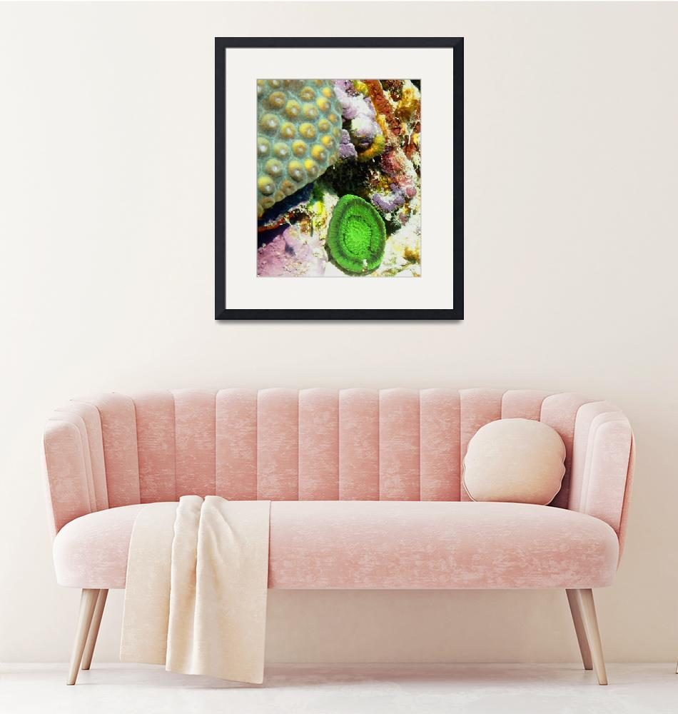 """""""Green Artichoke Anemone resting on Coral Reef""""  (2013) by scubagirlamy"""