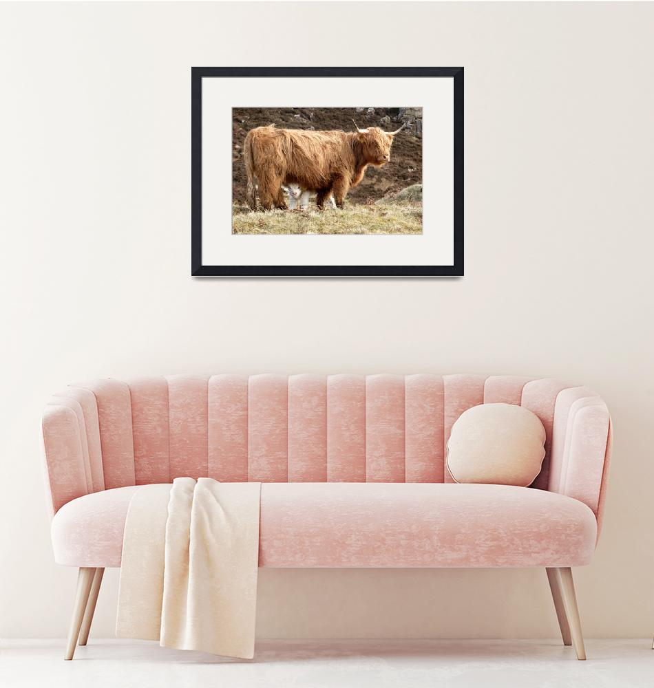 """""""Highland Cow and Calf""""  (2006) by Skyepix"""