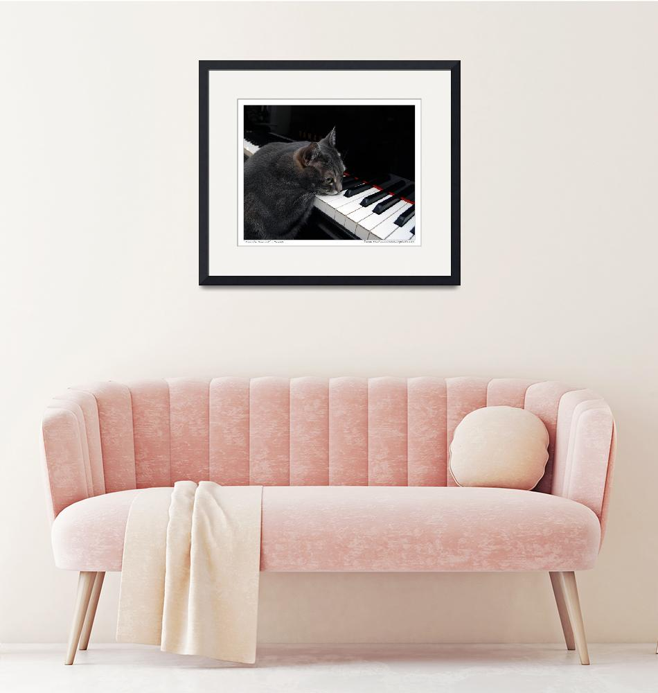 """""""Nora The Piano Cat™ - n0030"""" (2008) by ravenswingstudio"""