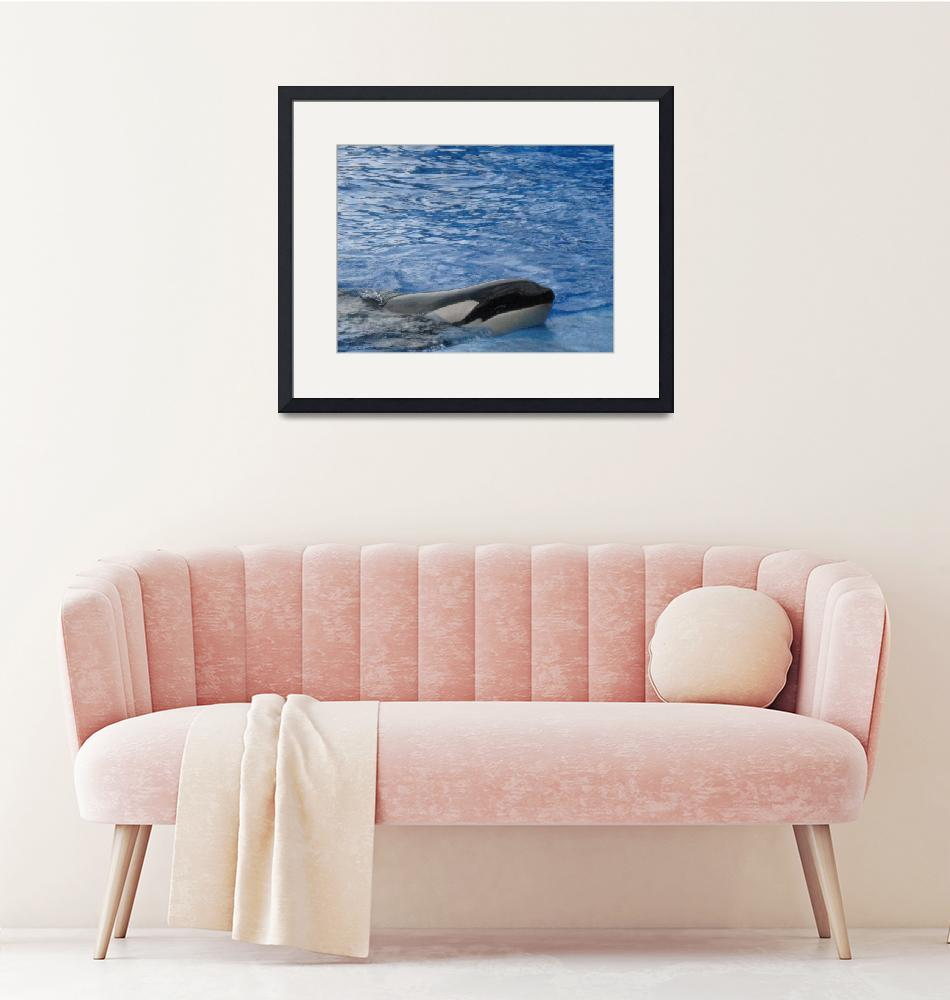 """""""A WHALE OF A TIME""""  (2010) by KATHY"""