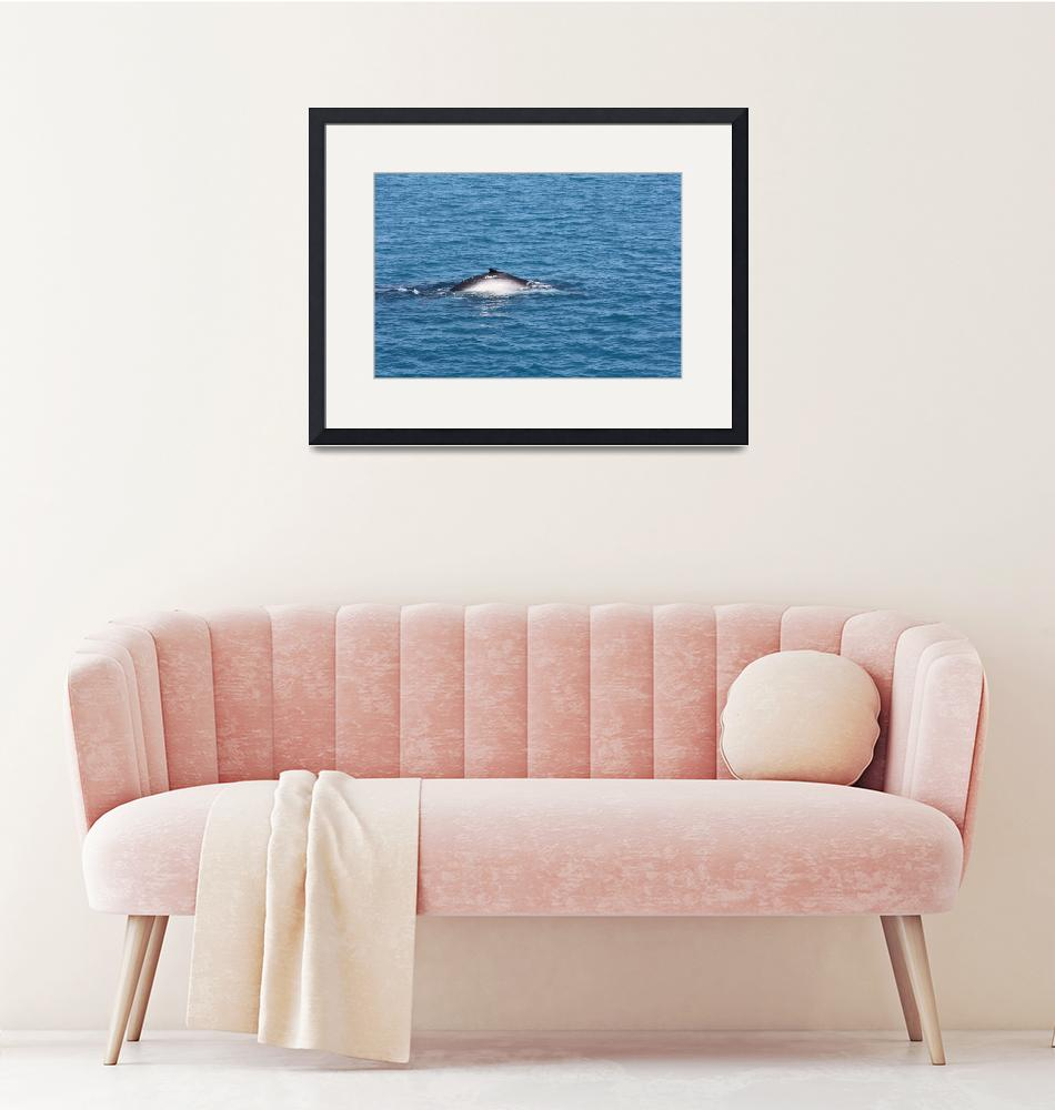 """""""NaP_ Whale Watching037""""  by nevilleprosser"""