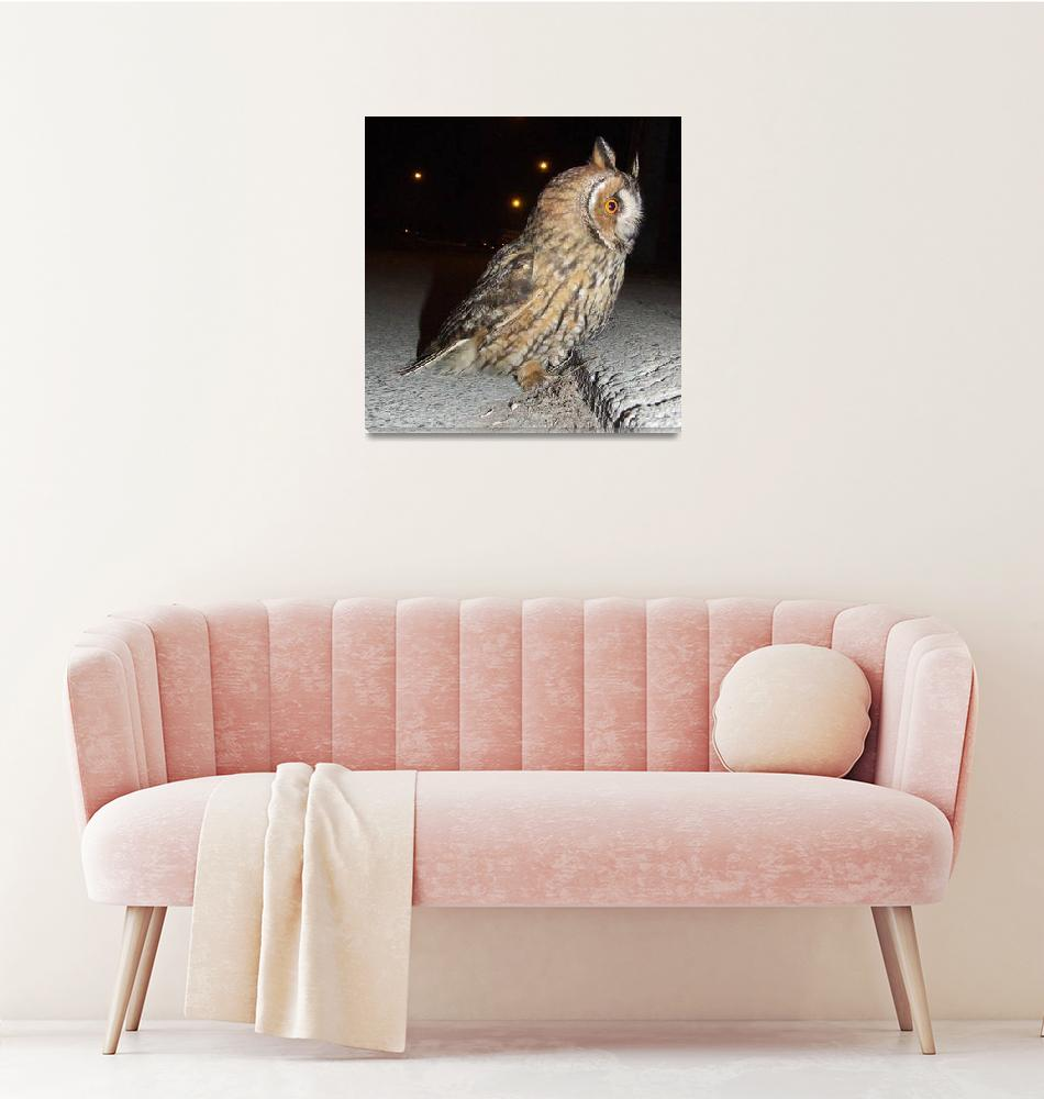 """Long eared owl (Asio otus) DSCF1768""  (2013) by Banstolac"