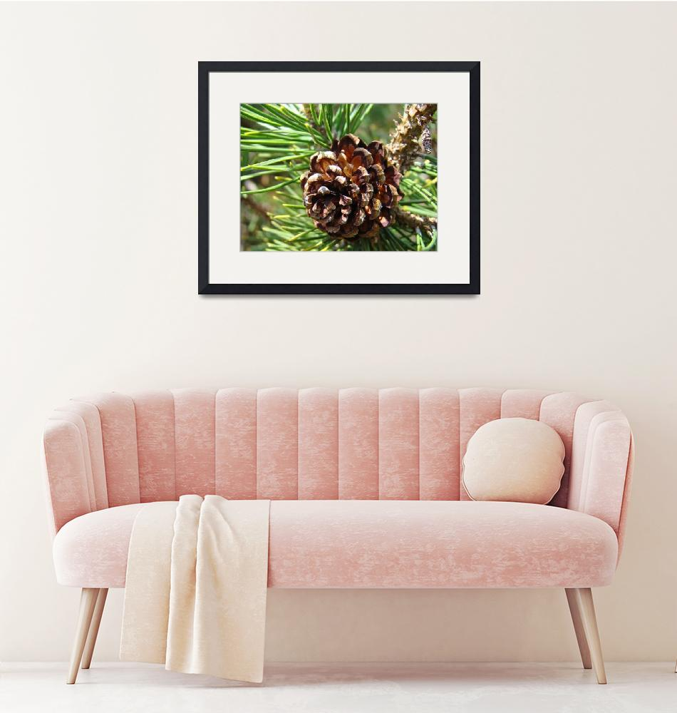 """""""Pine Cone Fine Art Phtography Conifer Trees""""  (2010) by BasleeTroutman"""