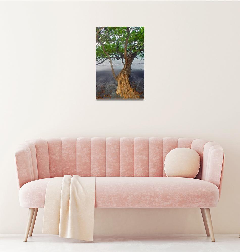 """Mangrove tree Costa Rica""  by eyalna"
