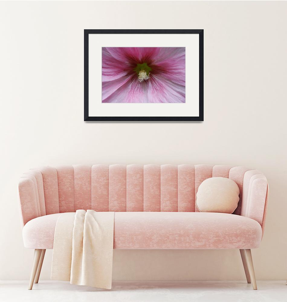 """""""Close up Clematis""""  (2012) by edesigns15"""