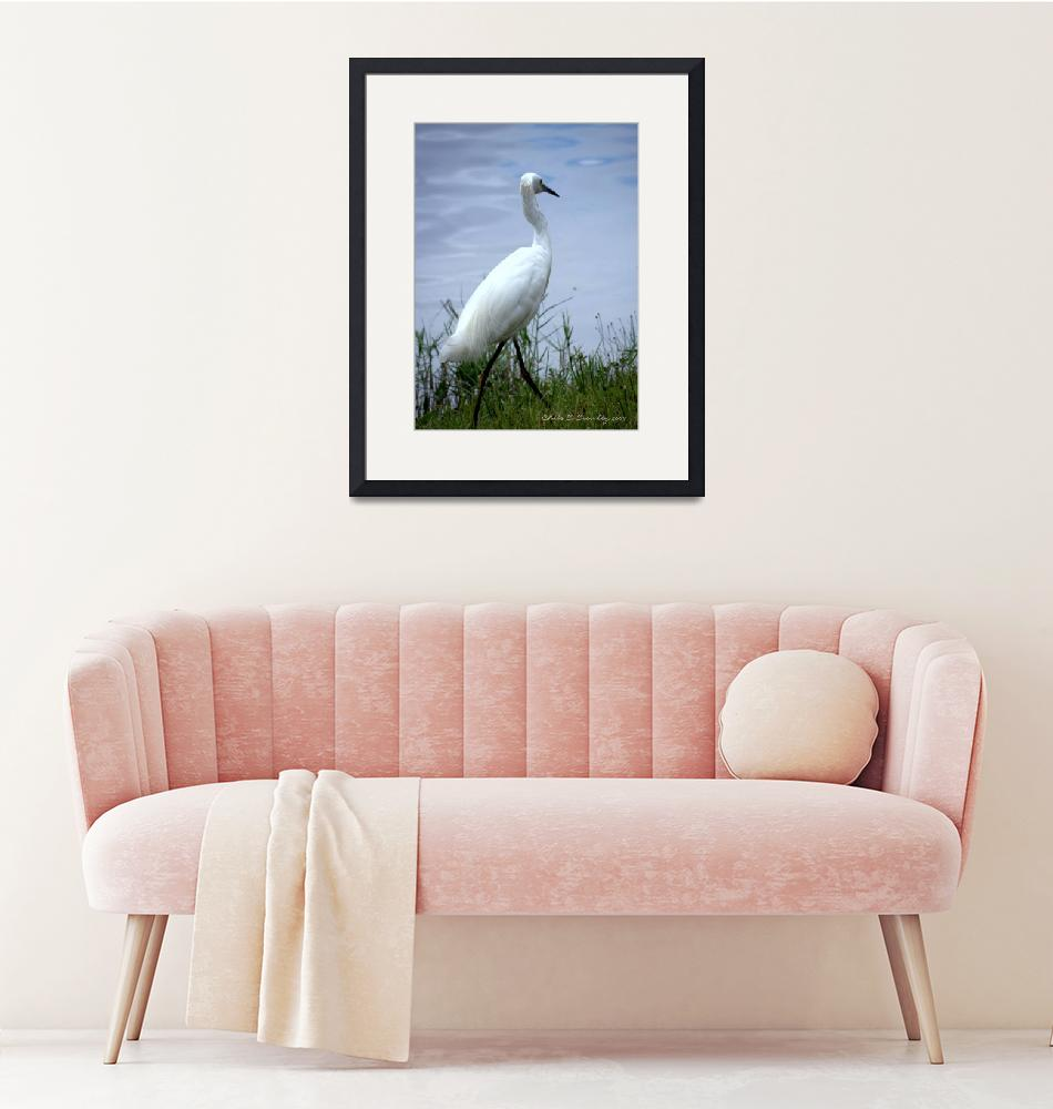 """""""An Egret Walks""""  (2009) by ChrisCrowley"""
