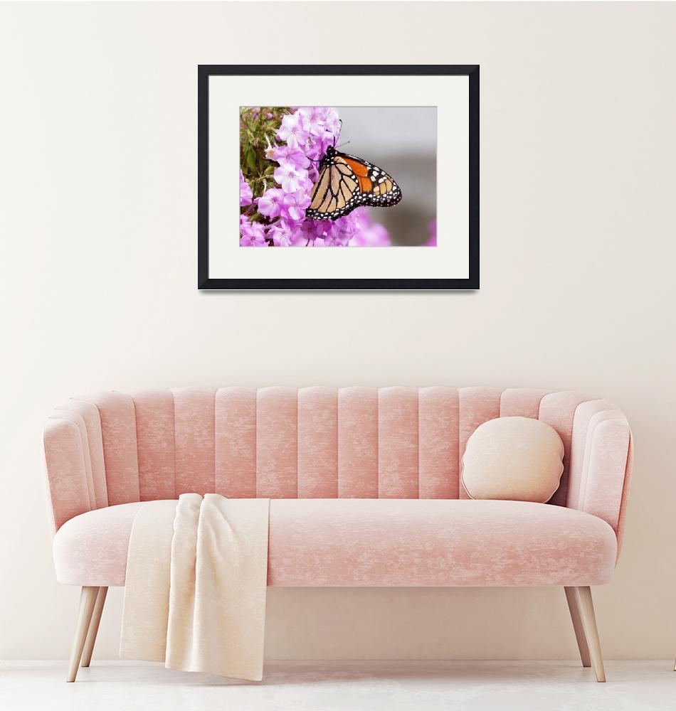 """""""Butterfly on pink Phlox""""  by cameragal"""