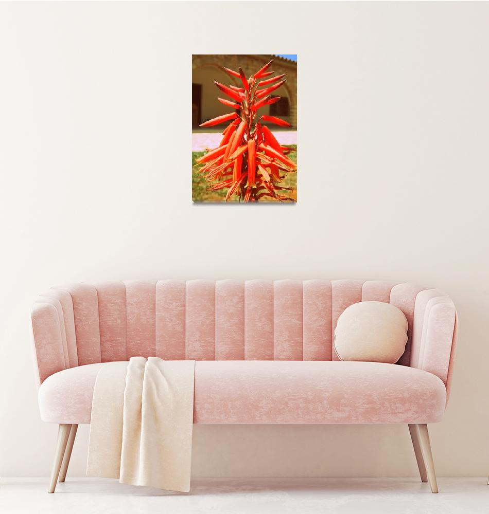 """""""Flower at the Monastery of Saint Barnabas, Cyprus""""  by Artsart"""