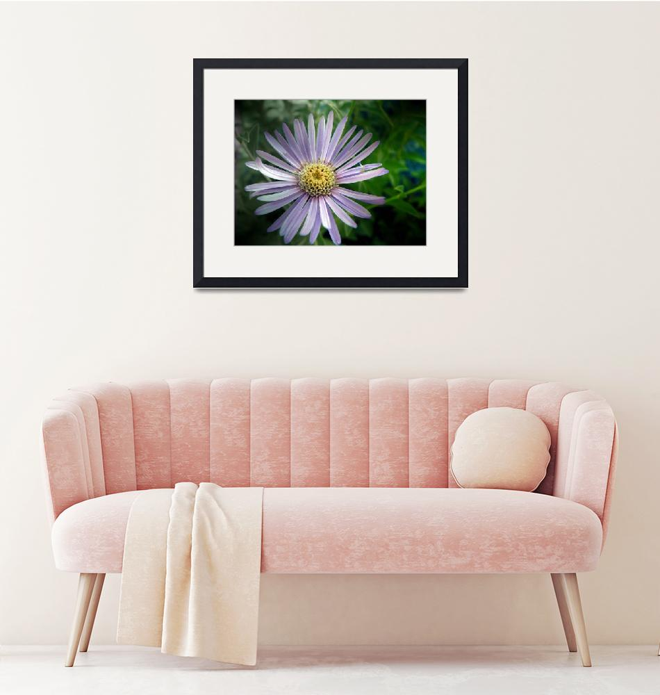 """""""Early Blooming Aster: My Front Yard""""  (2007) by Mylene"""