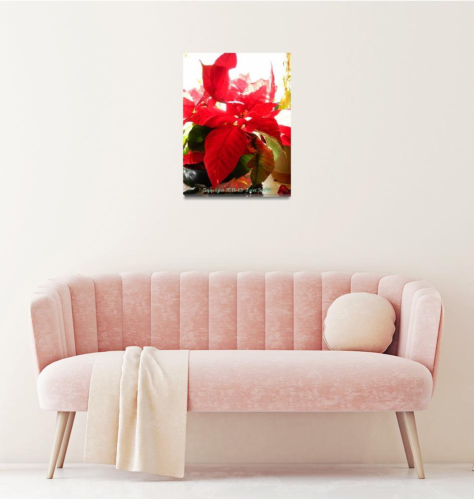 """""""Poinsettia In Light""""  by MysticLightPhotography"""