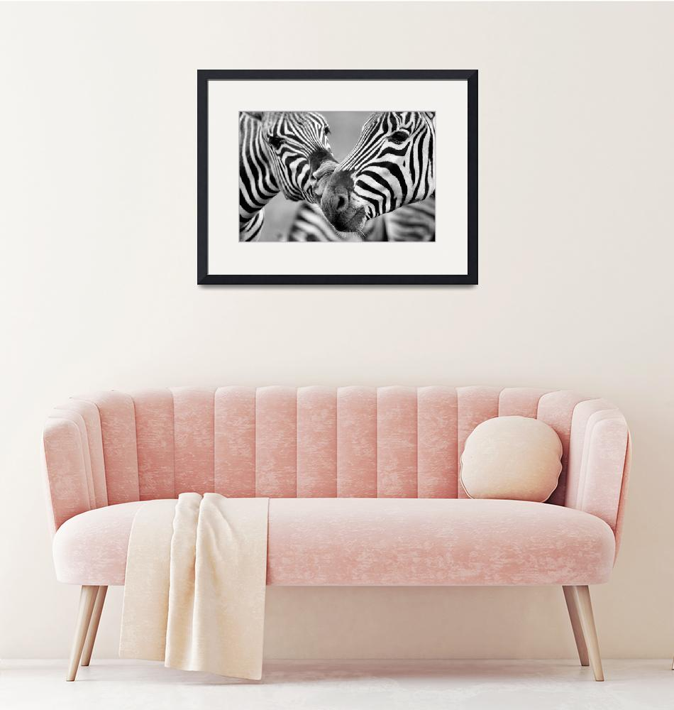 """""""Zebras in Black and White""""  (2010) by LauraM"""
