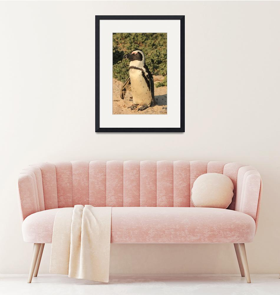 """""""African Penguin 8107""""  (2013) by rayjacque"""