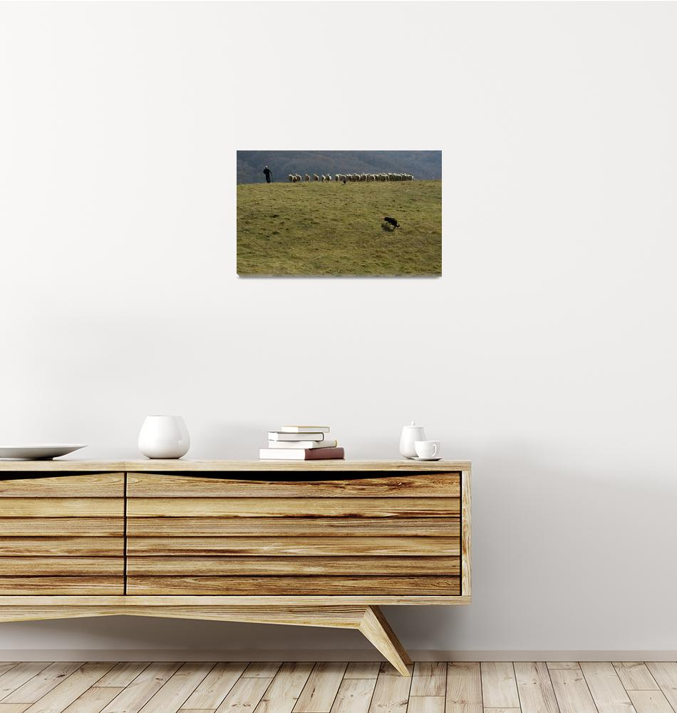 """Tending The Flock""  (2012) by DougCraigPhotography"