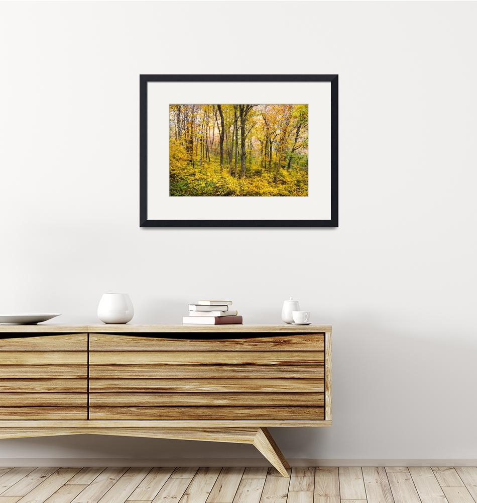 """Autumn Western NC Fall Foliage - Forest for the Tr""  (2012) by DAPhoto"