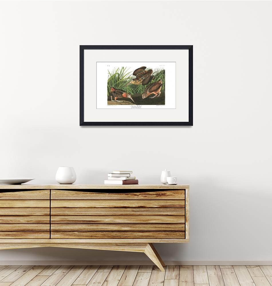 """""""American Woodcock, Plate 268""""  by FineArtClassics"""