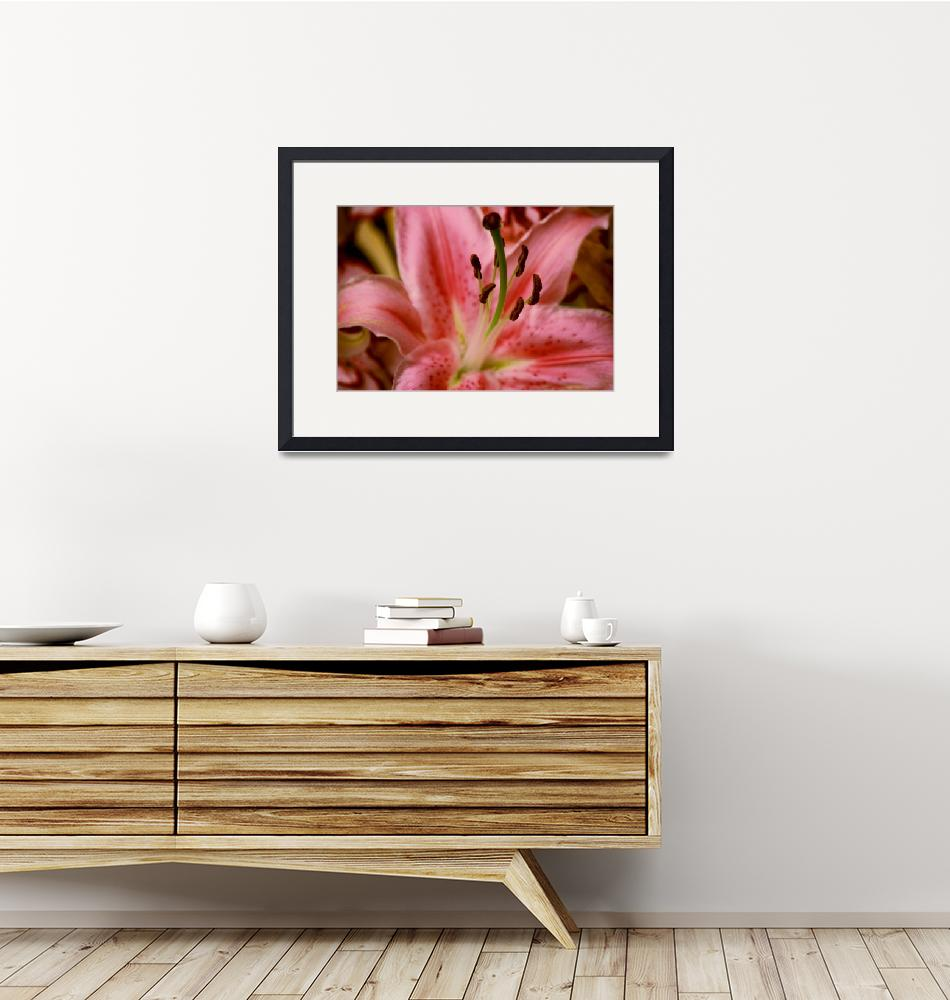 """""""Pink Lilly""""  (2008) by KatrinaH"""