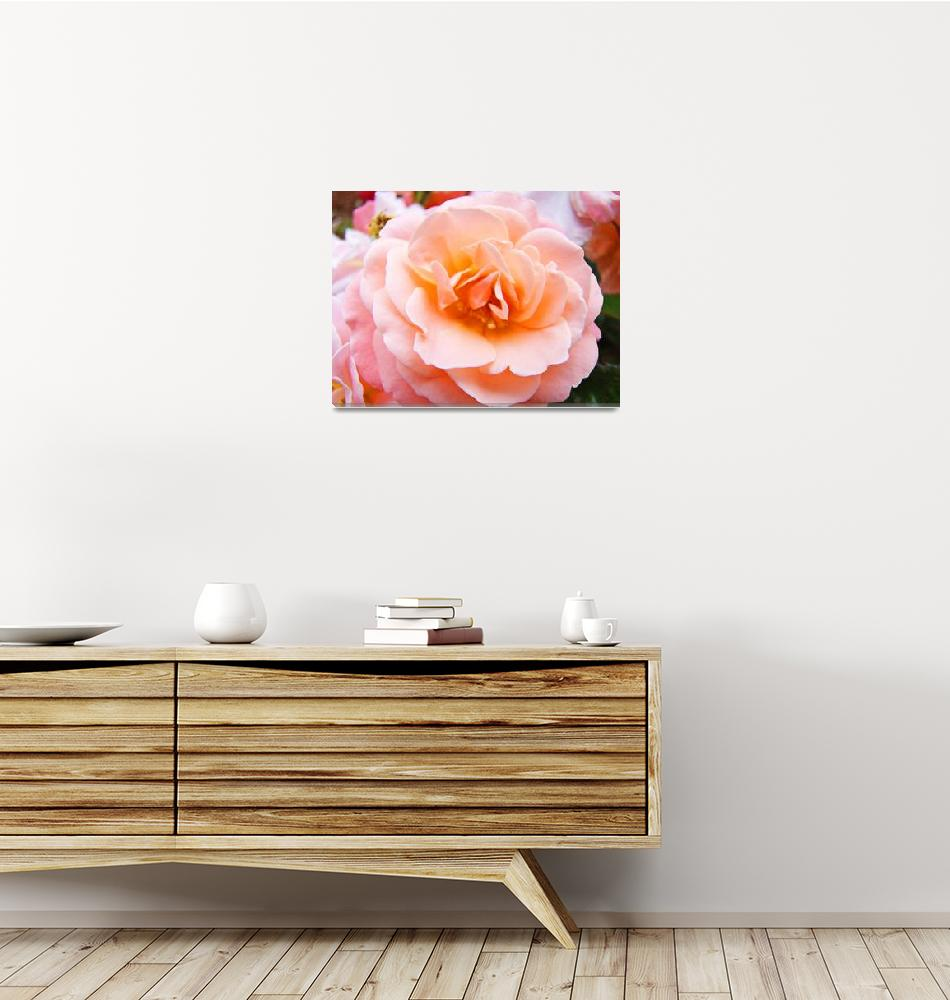 """Beautiful Peach Rose Flower Floral art prints""  (2010) by BasleeTroutman"