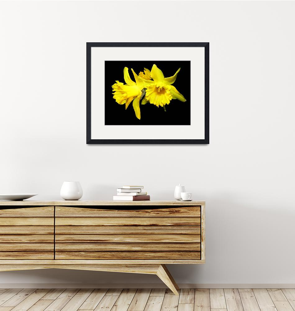"""""""Daffodils""""  (2009) by Luciajo"""