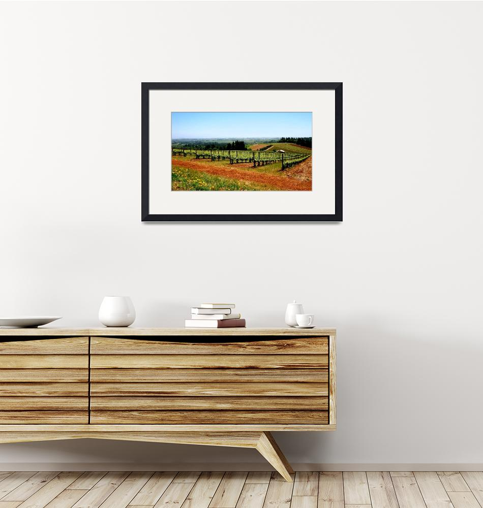"""Vineyards, Dundee""  (2008) by jacquelinemauritzartist"
