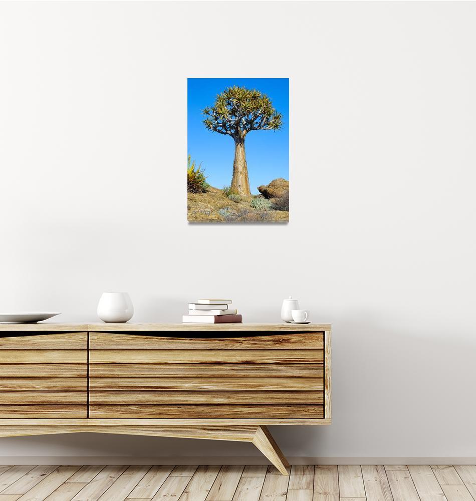 """Aloe dichotoma (Quiver Tree)""  (2007) by Martin_Heigan"
