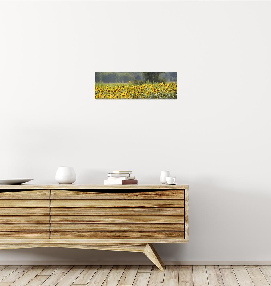 """Sunny Field Panorama""  (2013) by DuaneKlipping"