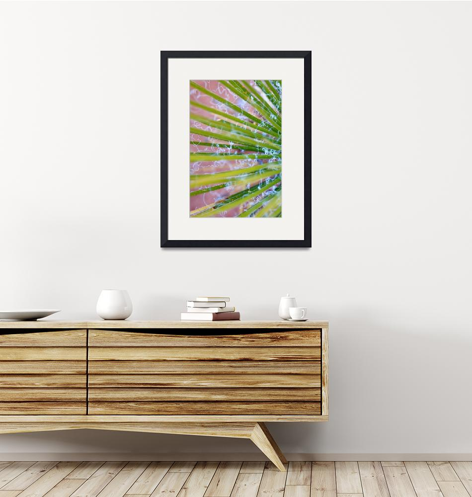 """""""Yucca Abstract Vertical""""  (2009) by SherylKaras"""