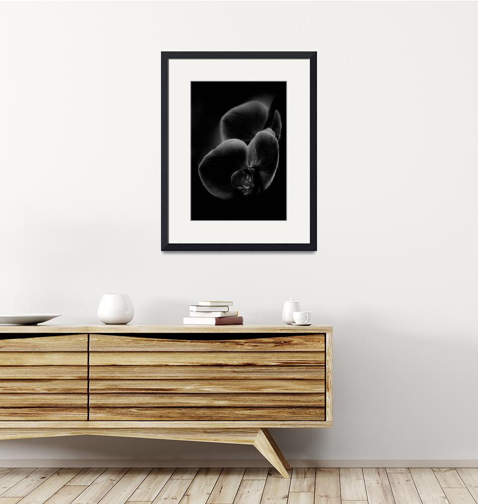 """""""Orchid in black and white""""  (2010) by alanshapiro"""
