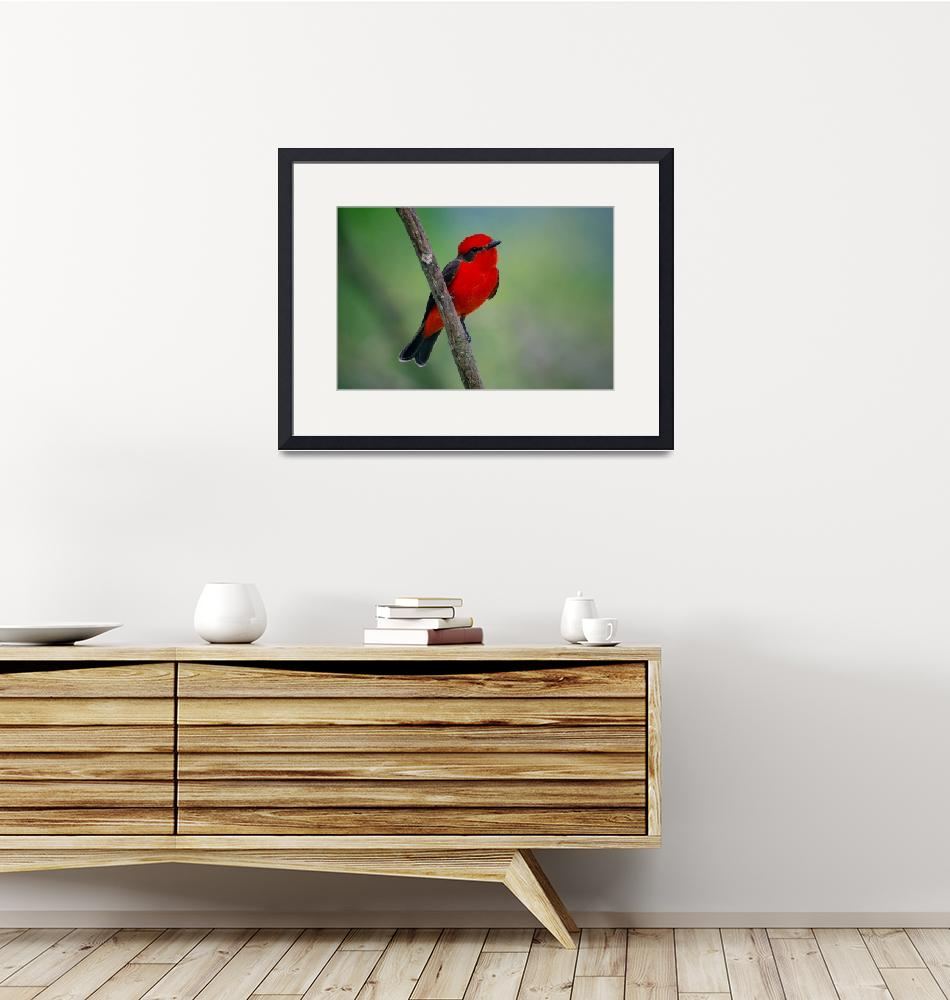 """Red flycatcher of Colombia""  (2016) by DanSteeves"