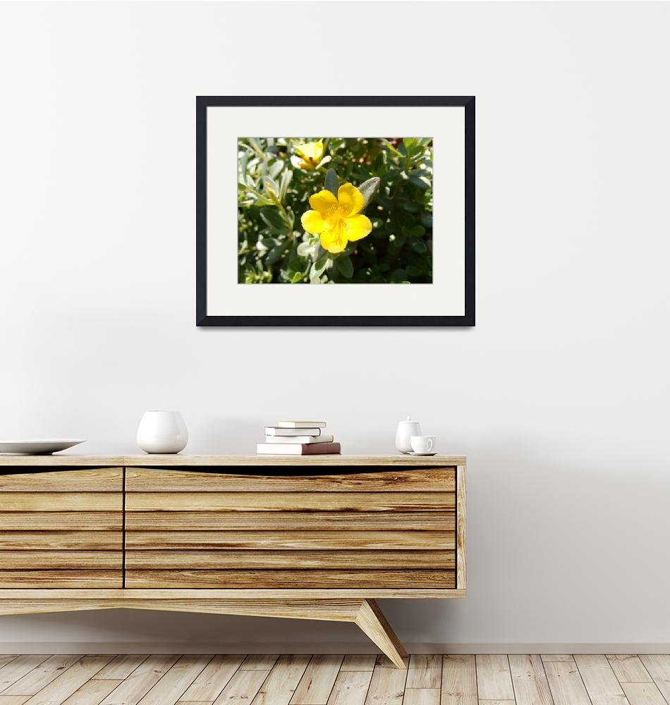 """""""Yellow flower of portulaca""""  (2017) by CLA"""