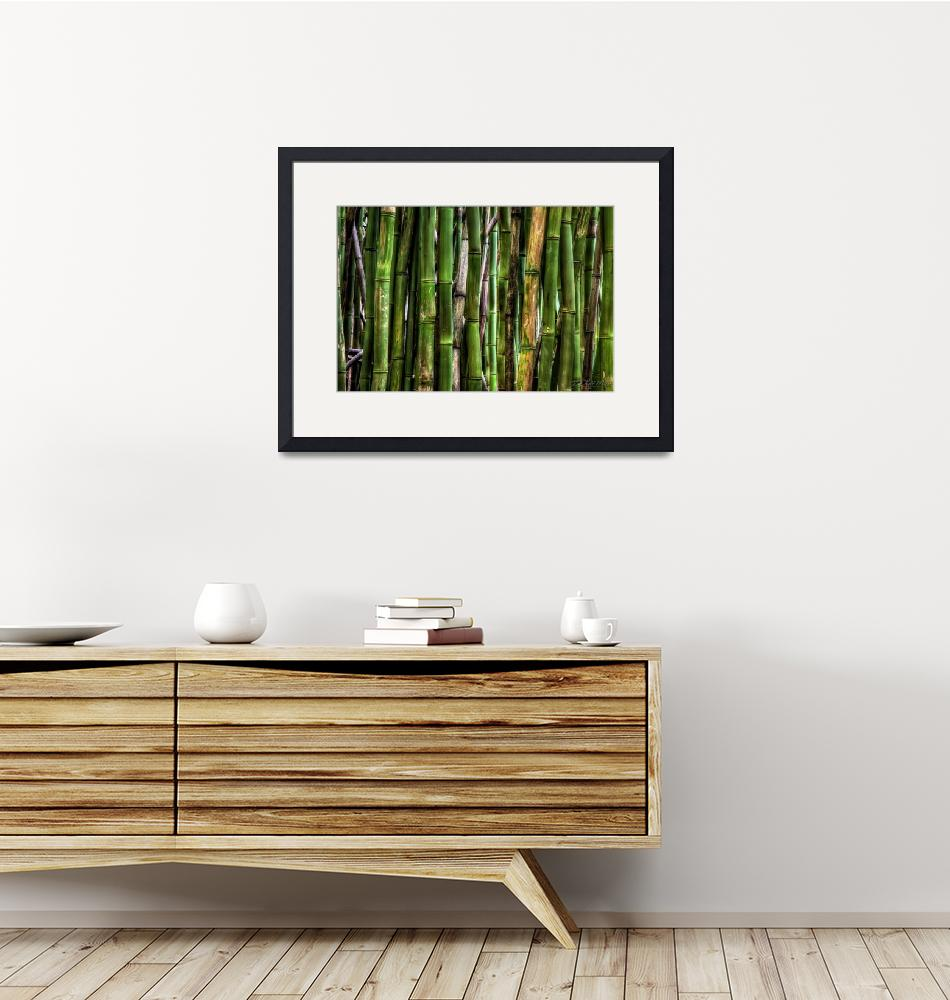 """""""Bamboo Forest""""  by RHMiller"""