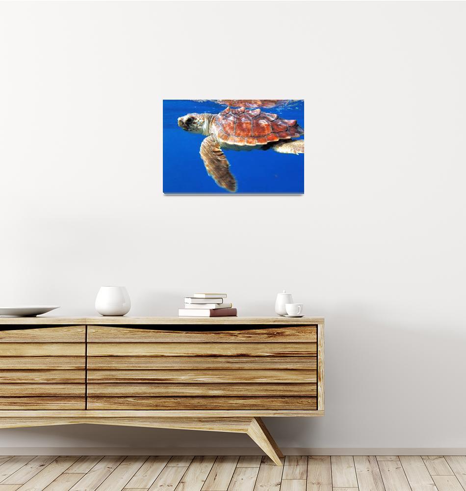 """Atlantic Turtle""  (2004) by JoaoPonces"