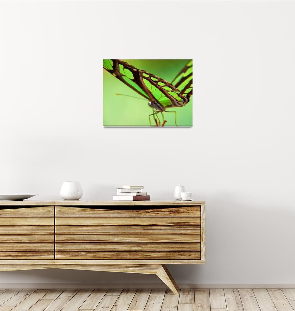 """Green butterfly""  (2007) by resouzaesouza"