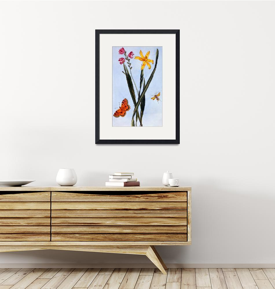 """""""South American Ixia""""  by fineartmasters"""