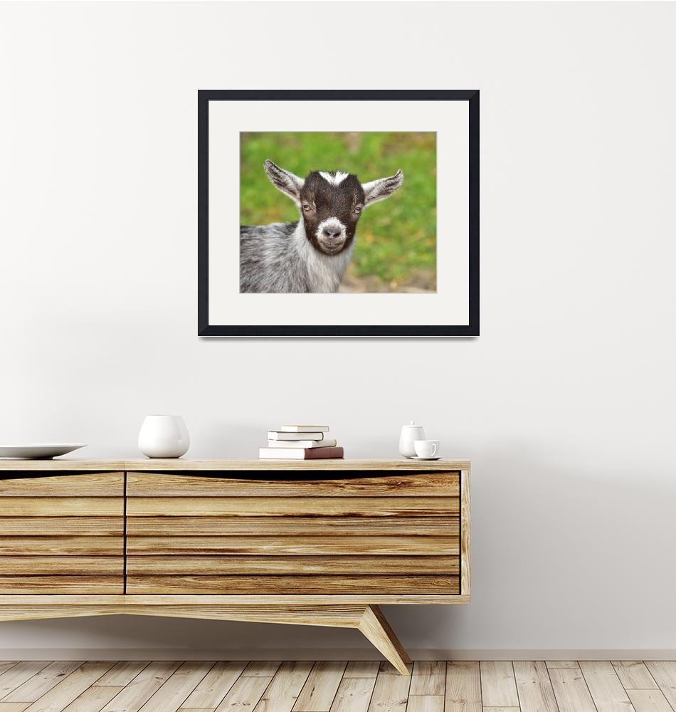 """Kid Goat""  (2015) by MarilynsArt"