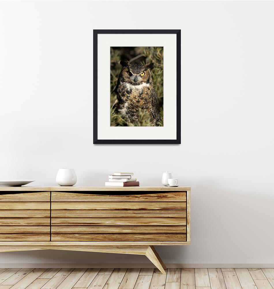 """""""Great Horned Owl 3dv03highres"""" by jimcrotty"""