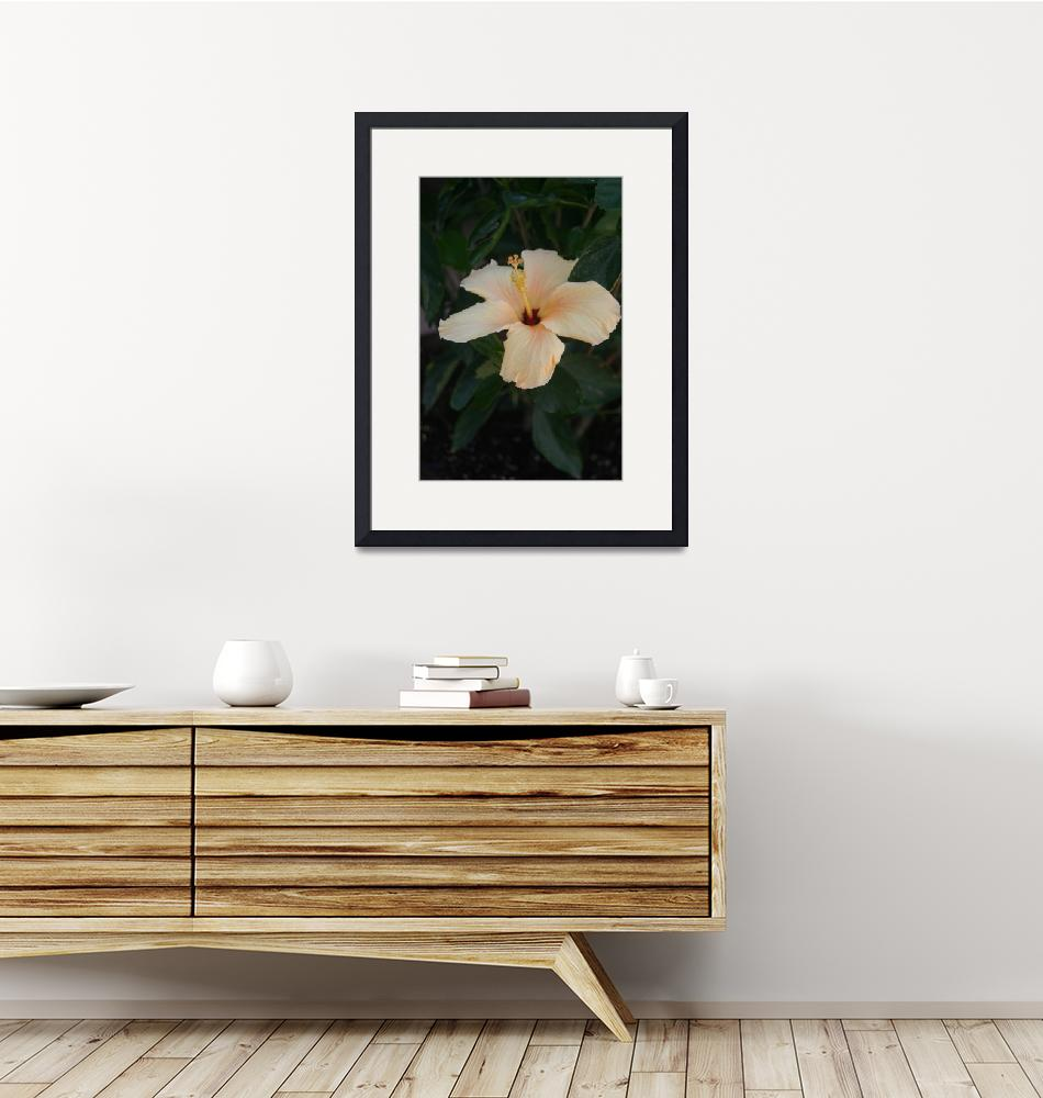 """""""Single Cream Colored Hibiscus Blossom""""  (2009) by imaginativeimagery"""
